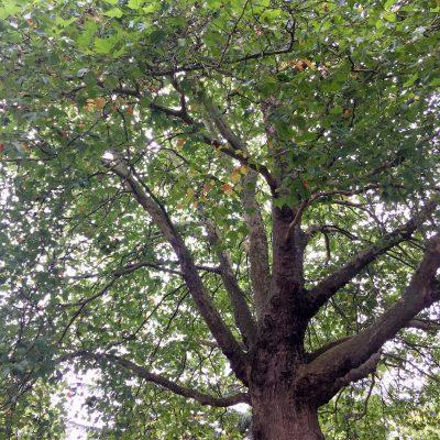 Autumn in Chapelfield Gardens