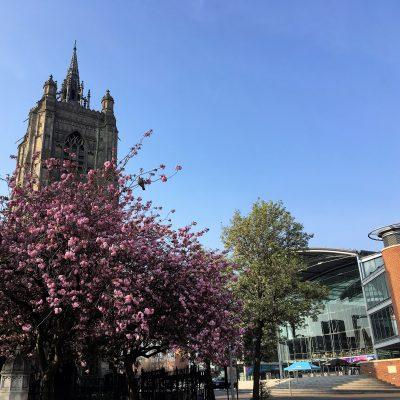 St Peter Mancroft Blossom