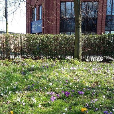 Spring in Chapelfield Gardens