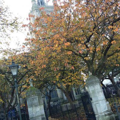 St Peter Mancroft in November