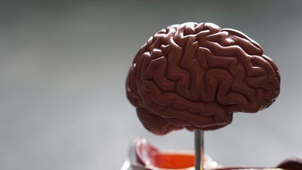 Exploring Brain Tumours and Brain Tumour Misdiagnosis
